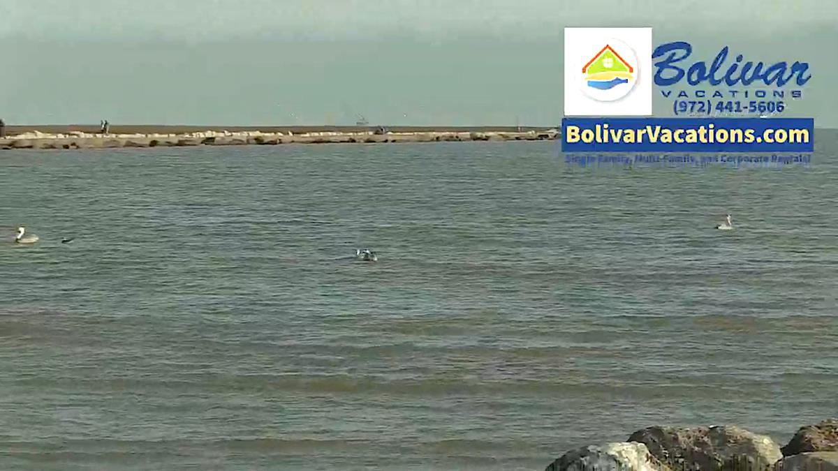Enjoy A Walk, Birds and Beautiful View From The North Jetties!