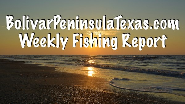Galveston and Crystal Beach Texas Weekly Bay and Offshore Fishing Report