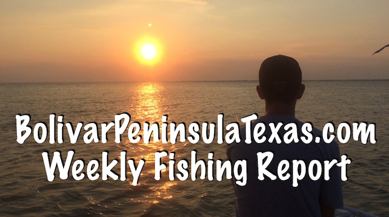 New for 2018 weekly galveston bay and jetty offshore for Galveston jetty fishing report