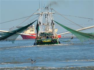 Crystal Beach Texas and Bolivar Peninsula is home to a fleet of Shrimp Boats both Bay and Offshore. Crab, Shrimp, Fish and in season Oyster can all be found at area Fish Houses and Stores in Crystal Beach.